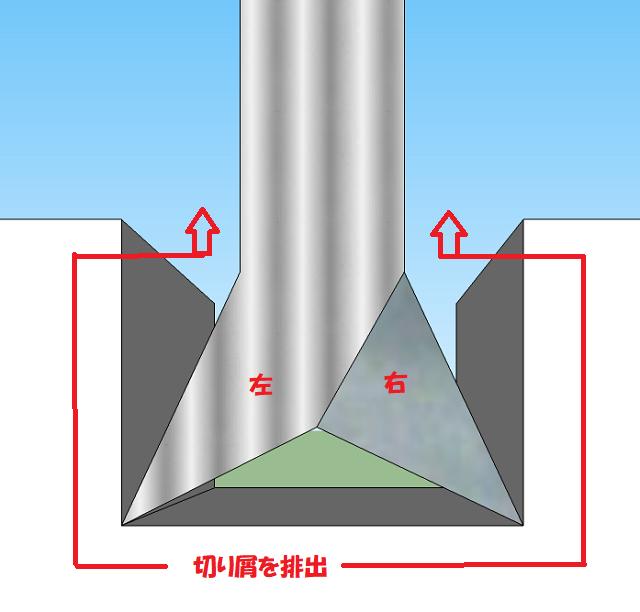 アサリの構造