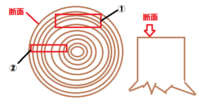 木の断面図